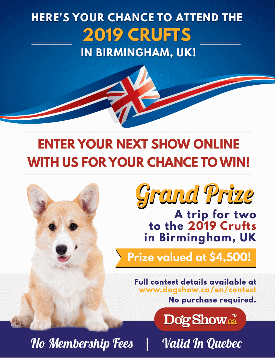 Win a trip for two to the 2019 Crufts